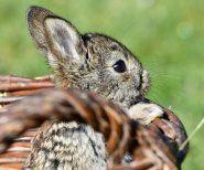 Tierquälerei: Kaninchen für Pelze misshandelt