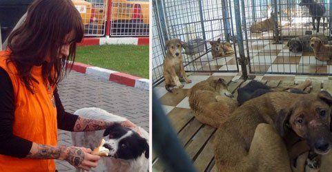 Sandy P.Peng kämpft für die Straßenhunde in Rumänien