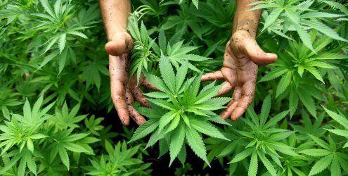 Teenies versuchten Einbruch um 19-Jährigem Cannabis zu klauen