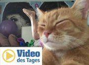 Katze versaut perfekte Yoga-Pose