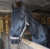 Pferdeparadies Feldkirch: Ermittlungen eingestellt
