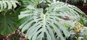 Immergrüne Pflanzen im VOL-AT-Gartentipp