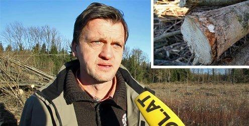 Chinesischer Killer-Pilz sorgt für ein Eschen-Sterben in Vorarlberg!