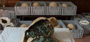 Antiker Münzschatz in Südspanien entdeckt