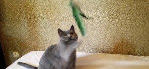 Beim Katzen-Coaching mit Petra Ott: Erste Hilfe für scheue Dachbodenkatzen