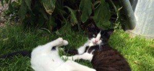 Kätzchen warten auf liebevolles Zuhause
