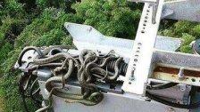 Kurios: Schlangennest auf Handymasten entdeckt