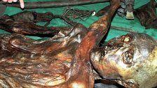 Das war Ötzis letzter Imbiss vor dem Tod