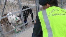 Mann in Spanien vonfünf Hunden totgebissen