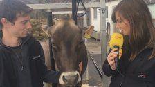 Kuuhl: Antenne zahlt Kuh von Alexander Bechter