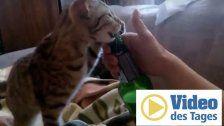 Super geschickt: Katze kann Flaschen öffnen