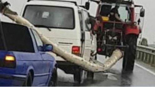 Maibaum während der Fahrt von Auto aus zersägt: Video