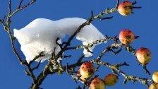 Obstbauern zittern: Ein Ernteausfall ist sicher