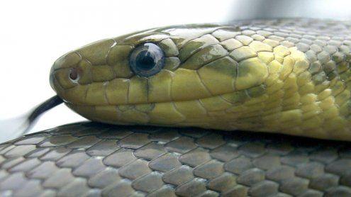 Immer mehr Schlangen in den österreichischen Gärten gesichtet