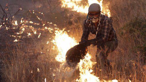 Waldbrände wüten in Portugal - Tausende bekämpfen die Brände