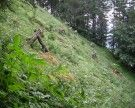 20.000 Bäume am Staufen gepflanzt