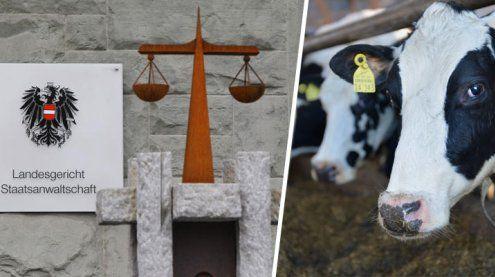 Prozess um Tierquälerei: Bauer kommt mit Diversion davon
