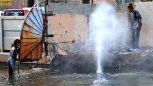 Marseille: Verirrter Wal im Hafenbecken